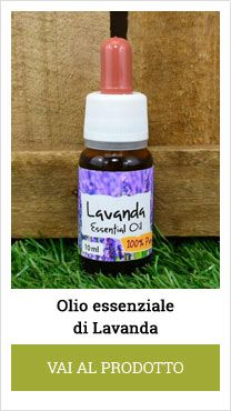 lavander essential oil