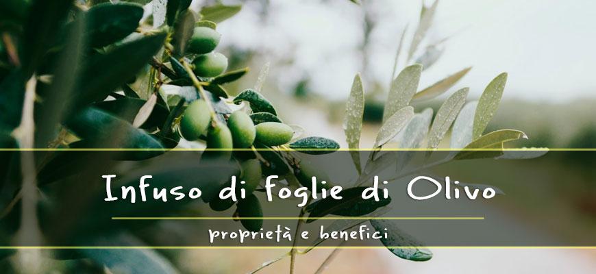 Infuso di foglie di Olivo: Proprietà e benefici