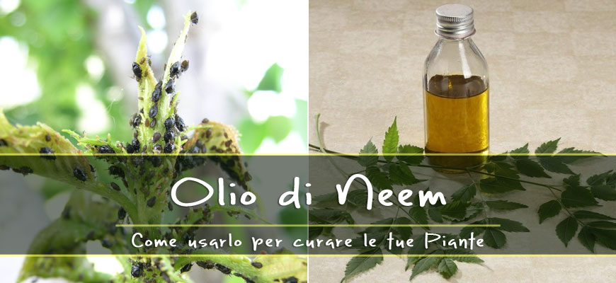 olio di neem cura piante