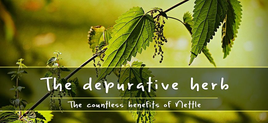 benefits of stinging nettle