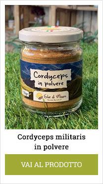 cordyceps polvere