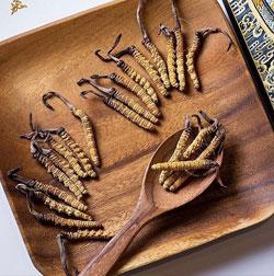 cordyceps viagra naturale potente