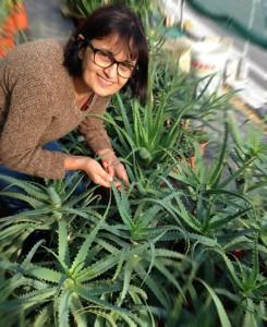 come coltivare pianta di aloe arborescens
